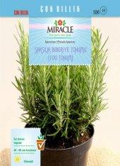 Miracle Saksılık Biberiye Tohumu (100 Tohum) 10 Adet