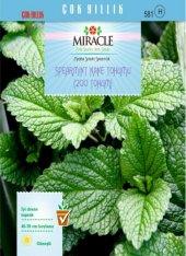 Miracle Spearmint Nane Tohumu (200 Tohum) 10 Adet