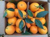 Finike Portakalı 1 Koli (Yaklaşık 11 Kg)