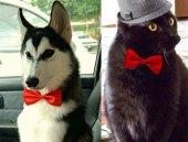 Kedi Köpek Papyonu (Asorti)