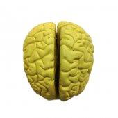 Beyin Modeli Bj 721814