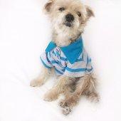 Gri Mavi Çizgili Polo Yaka Tişört By Kemique Köpek Kıyafeti Kö