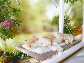 Sunny Seat Cama Yapışan Kedi Yatağı