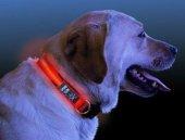 ışıklı Köpek Tasması