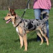 Trixie Köpek Yürüme Eğitim Tasması L45 65cm 25mm