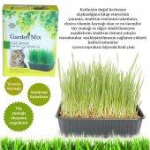 Gardenmix Kedi Çimi
