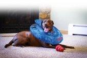 Kong Köpek Koruyucu Şişme Yakalık Xl
