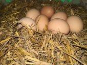 Yumurta Doğal Köy Yumurtası 30 Lu Paket