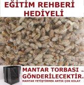 Istiridye Kavak Mantarı Tohumu Miseli + Mantar Tor...