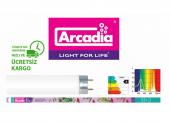 Arcadia Orijinal Tropical Lamp T8 Akvaryum Floresan 18w , 60 Cm